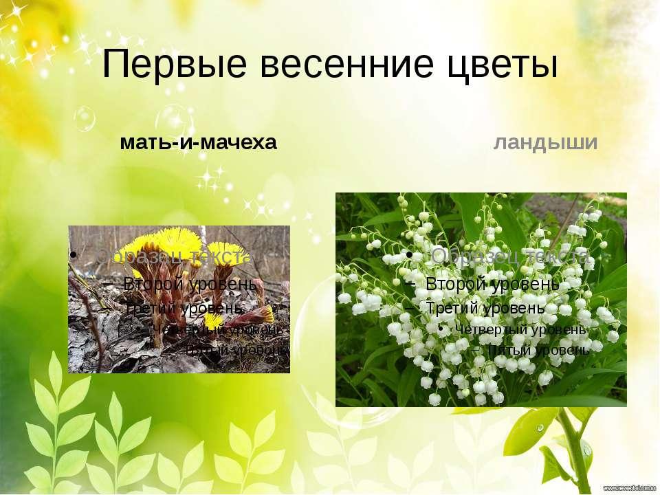 Первые весенние цветы мать-и-мачеха ландыши