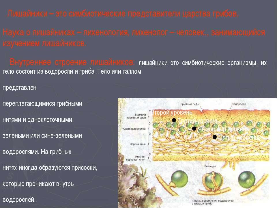 Питание лишайников: нити гриба поглощают воду и растворенные в ней минеральны...