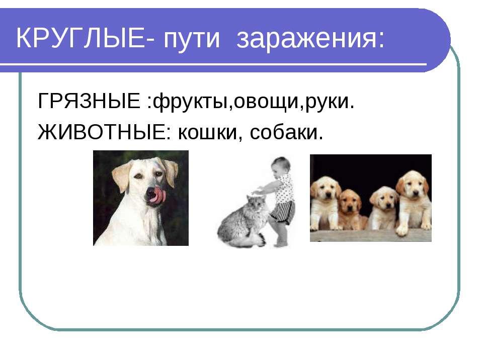 КРУГЛЫЕ- пути заражения: ГРЯЗНЫЕ :фрукты,овощи,руки. ЖИВОТНЫЕ: кошки, собаки.