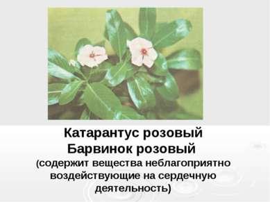 Катарантус розовый Барвинок розовый (содержит вещества неблагоприятно воздейс...