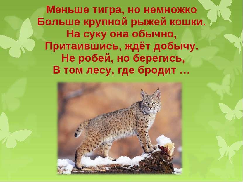 Меньше тигра, но немножко Больше крупной рыжей кошки. На суку она обычно, При...