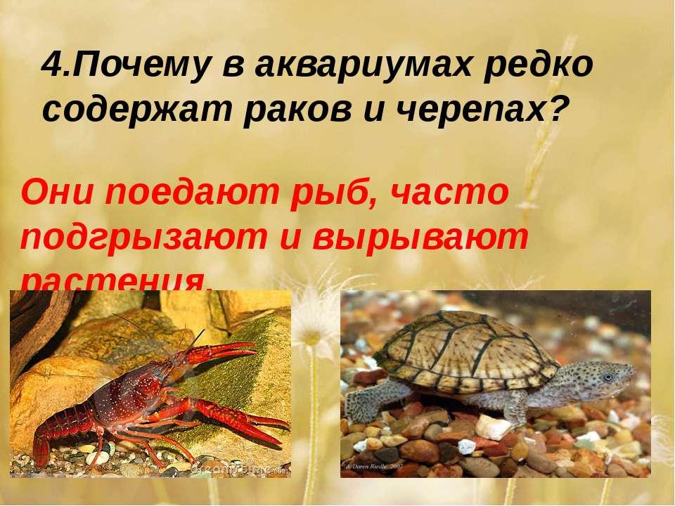 4.Почему в аквариумах редко содержат раков и черепах? Они поедают рыб, часто ...
