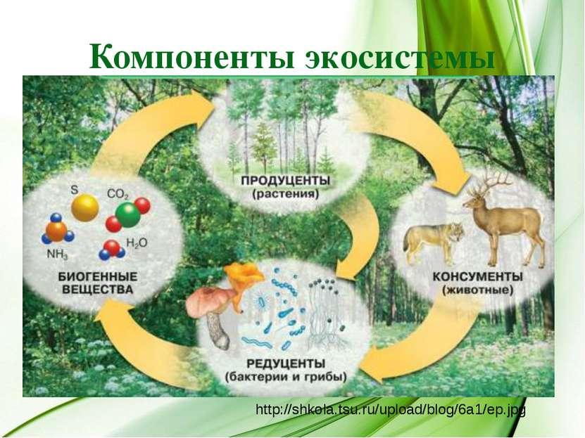 Компоненты экосистемы http://shkola.tsu.ru/upload/blog/6a1/ep.jpg