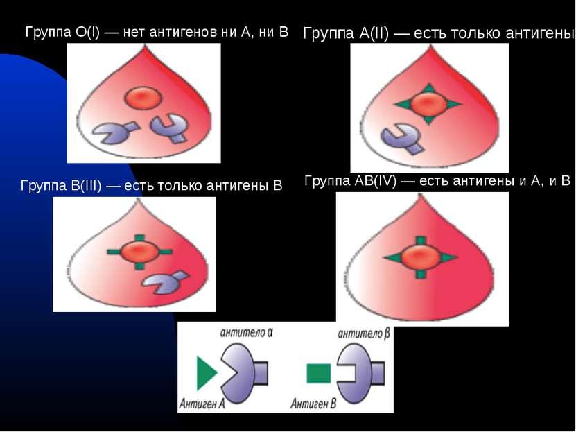 Группа О(I) — нет антигенов ни А, ни В Группа А(II) — есть только антигены А ...
