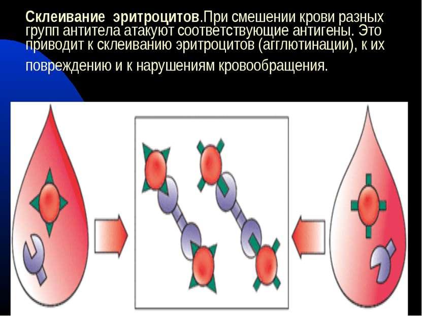 Склеивание эритроцитов.При смешении крови разных групп антитела атакуют соотв...