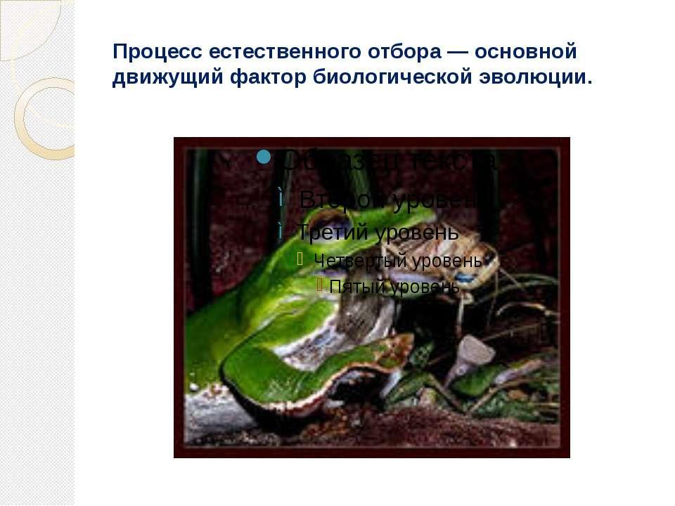 Процесс естественного отбора — основной движущий фактор биологической эволюции.