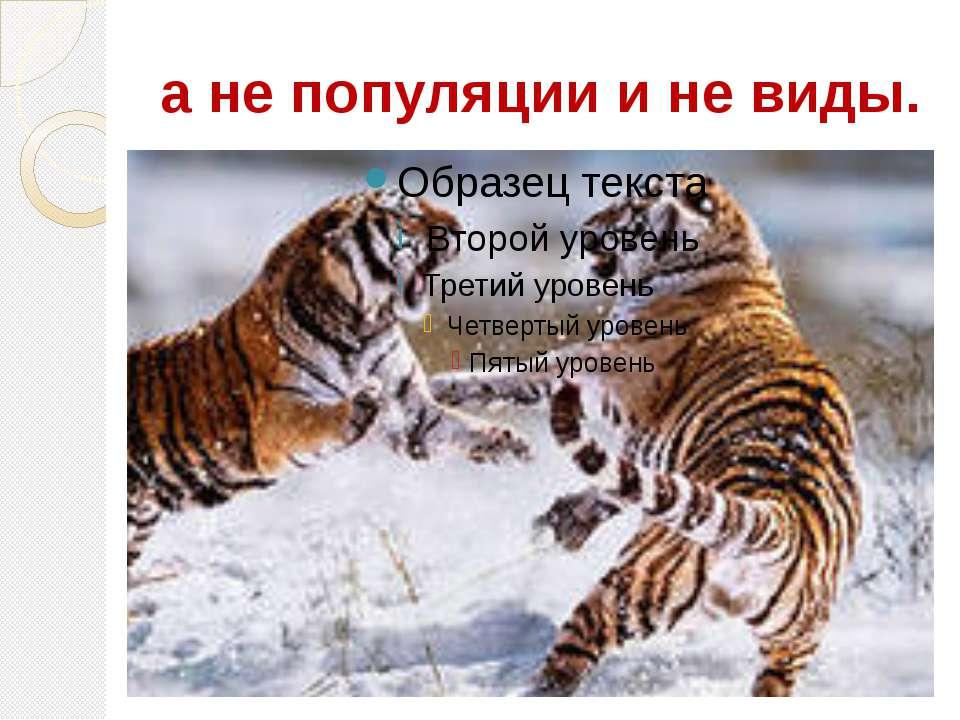 а не популяции и не виды.