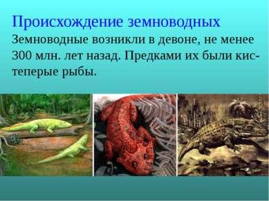 Происхождение земноводных Земноводные возникли в девоне, не менее 300 млн. ле...