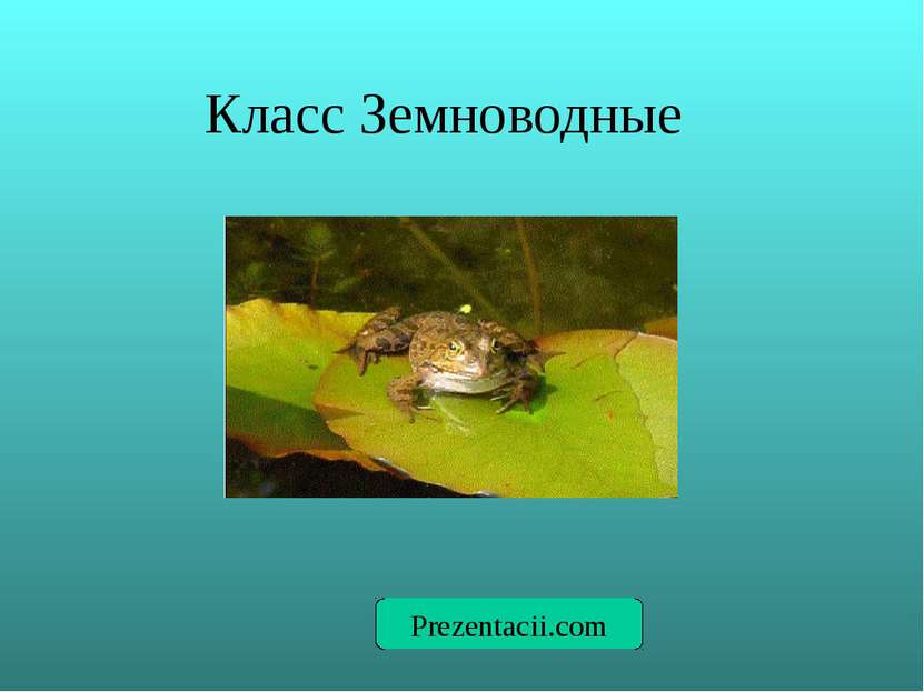 Класс Земноводные Prezentacii.com
