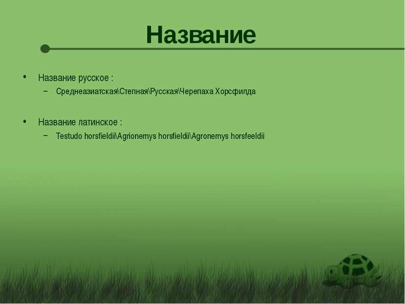 Название Название русское : Среднеазиатская\Степная\Русская\Черепаха Хорсфилд...