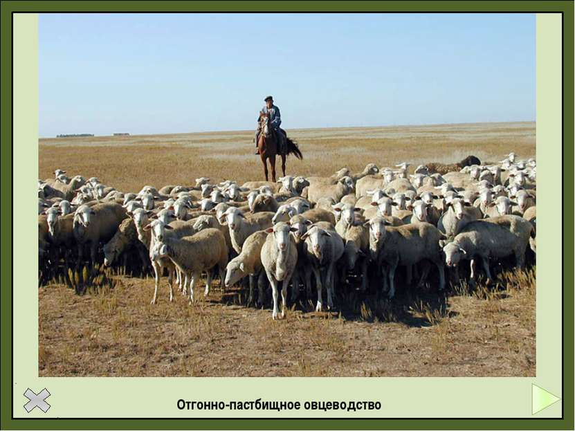 Выпас крупного рогатого скота в традиционном африканском хозяйстве