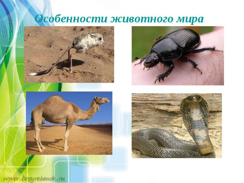 Особенности животного мира