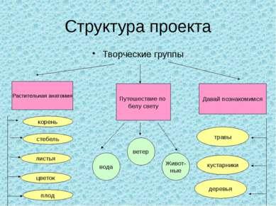 Структура проекта Творческие группы Растительная анатомия Путешествие по белу...