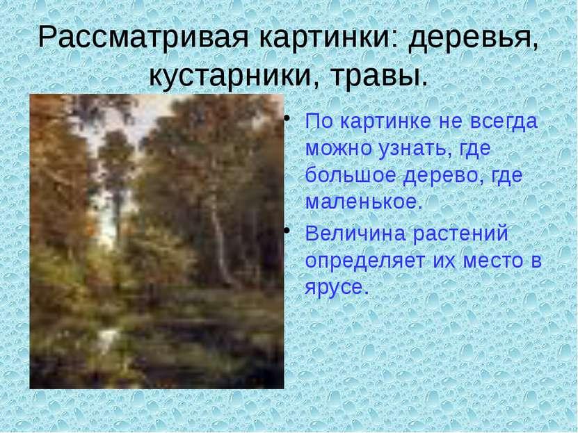 Рассматривая картинки: деревья, кустарники, травы. По картинке не всегда можн...