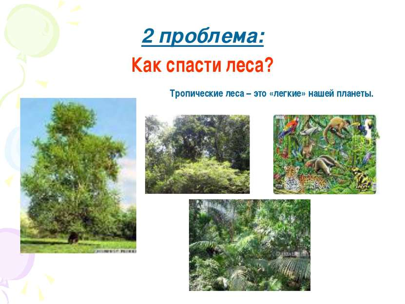 2 проблема: Как спасти леса? Тропические леса – это «легкие» нашей планеты.