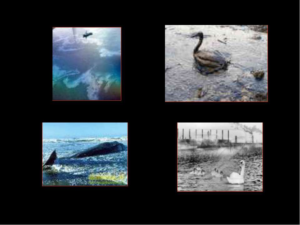 Загрязнение мирового океана как глобальная экологическая