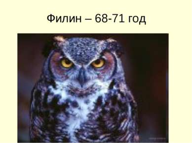Филин – 68-71 год