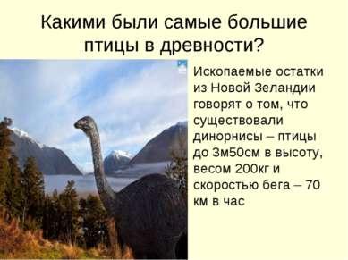 Какими были самые большие птицы в древности? Ископаемые остатки из Новой Зела...