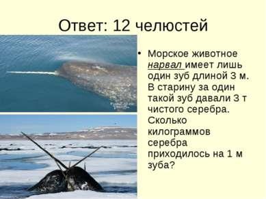 Ответ: 12 челюстей Морское животное нарвал имеет лишь один зуб длиной 3 м. В ...