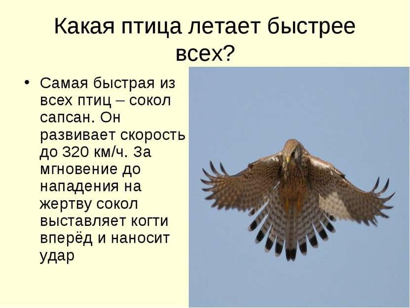 Какая птица летает быстрее всех? Самая быстрая из всех птиц – сокол сапсан. О...