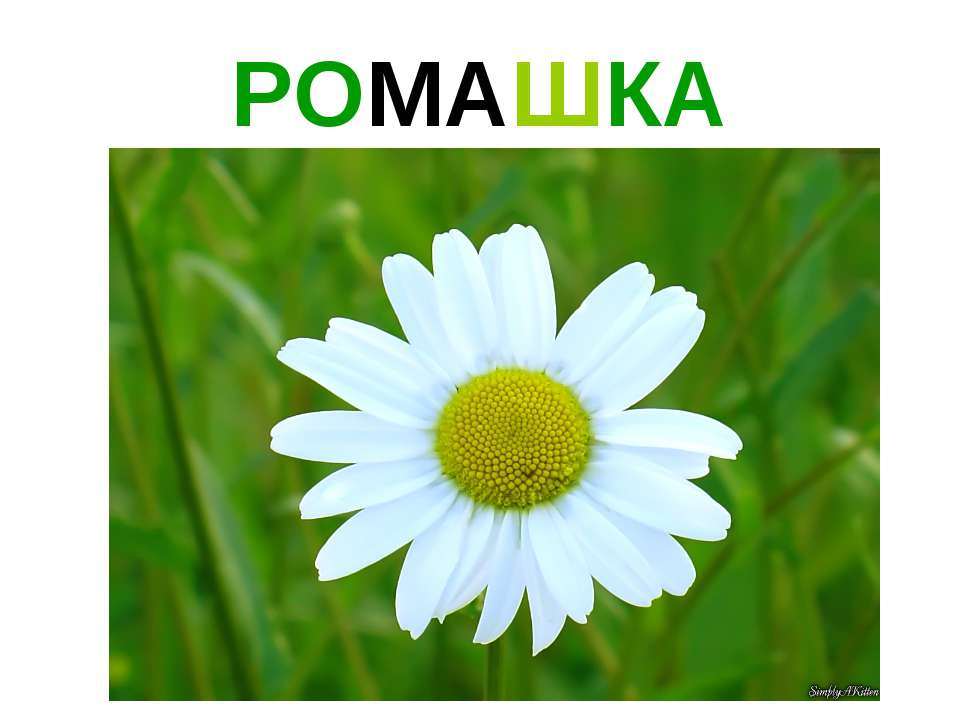 РОМАШКА