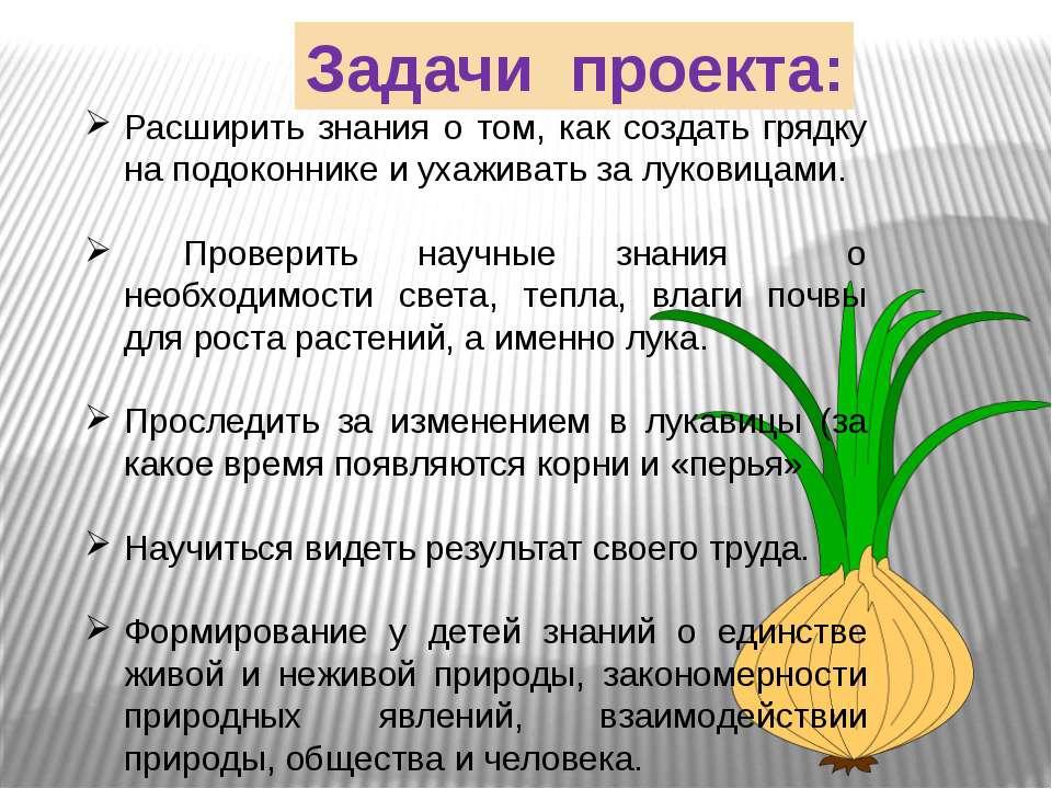 Задачи проекта: Расширить знания о том, как создать грядку на подоконнике и у...