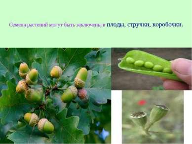 Семена растений могут быть заключены в плоды, стручки, коробочки.