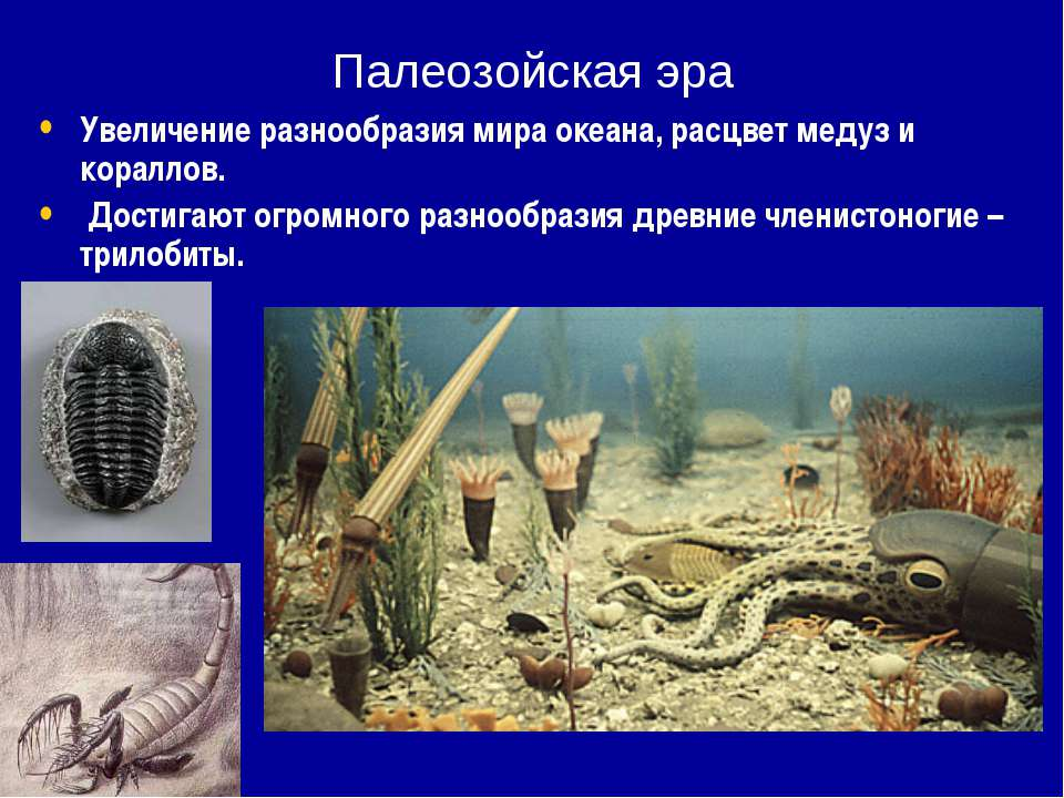 Палеозойская эра Увеличение разнообразия мира океана, расцвет медуз и коралло...
