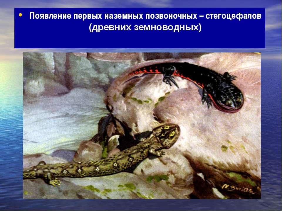 Появление первых наземных позвоночных – стегоцефалов (древних земноводных)