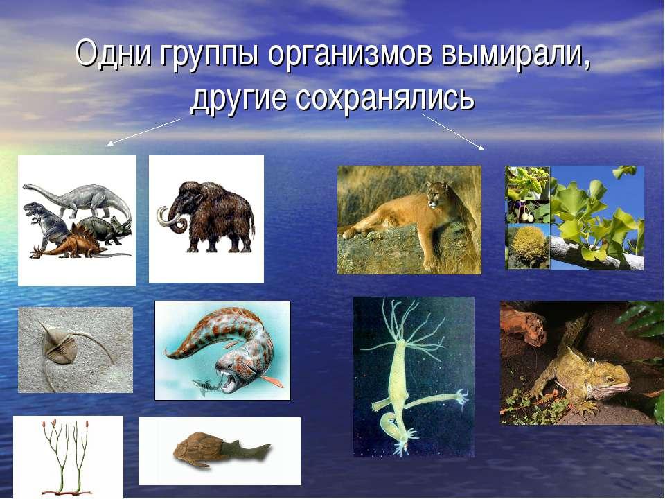 Одни группы организмов вымирали, другие сохранялись