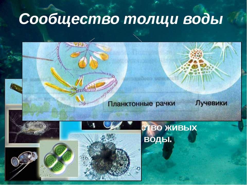 Сообщество толщи воды планктон активно плавающие организмы Что такое планктон...