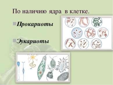 Прокариоты Эукариоты По наличию ядра в клетке.