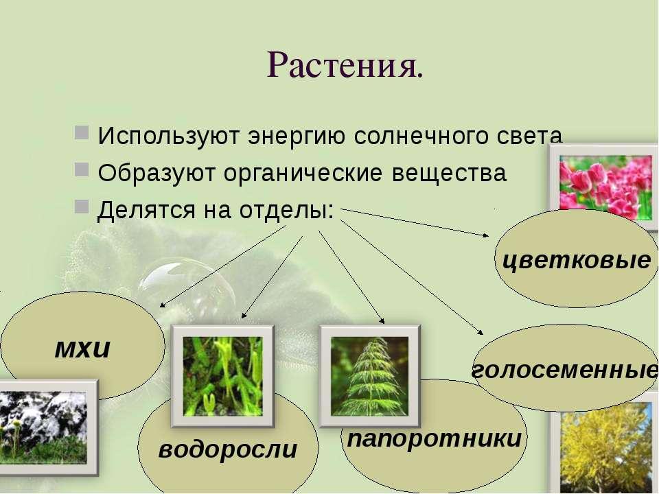 Растения. Используют энергию солнечного света Образуют органические вещества ...