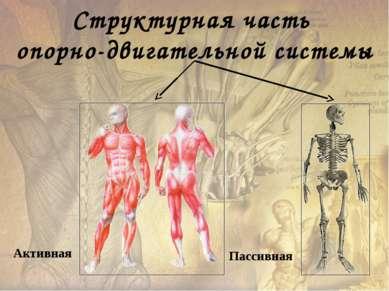Тонус – состояние длительного удерживаемого незначительного напряжения мышц. ...