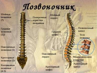 Лобная кость Череп Теменная кость Височная кость Нижняя челюсть Скуловая кост...