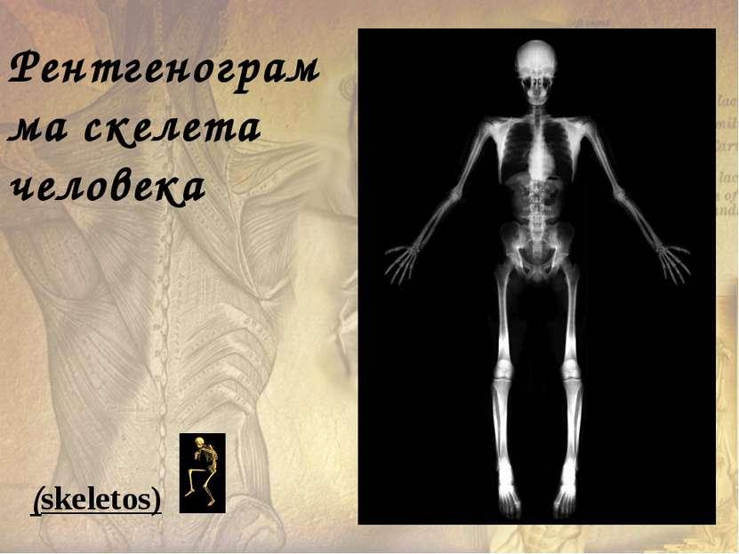Рентгенограмма скелета человека (skeletos)