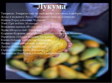 Розовое яблоко(Syzygium jambos;Myrtaceae) Яванское яблоко(Syzygium samaran...