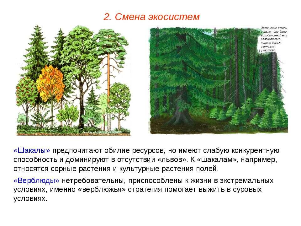 2. Смена экосистем «Шакалы» предпочитают обилие ресурсов, но имеют слабую кон...