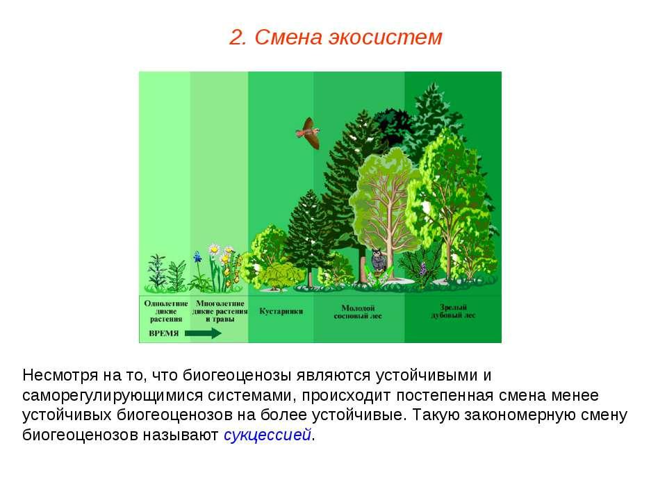 2. Смена экосистем Несмотря на то, что биогеоценозы являются устойчивыми и са...