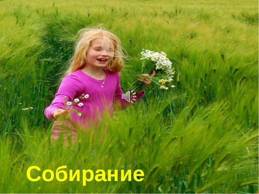 Собирание цветов.