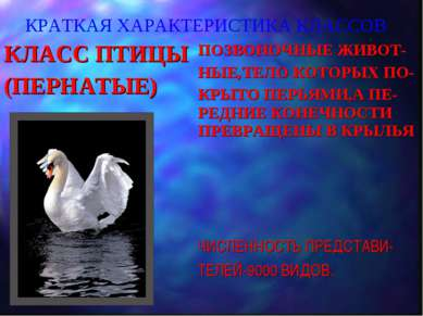 КРАТКАЯ ХАРАКТЕРИСТИКА КЛАССОВ КЛАСС ПТИЦЫ (ПЕРНАТЫЕ) ПОЗВОНОЧНЫЕ ЖИВОТ- НЫЕ,...