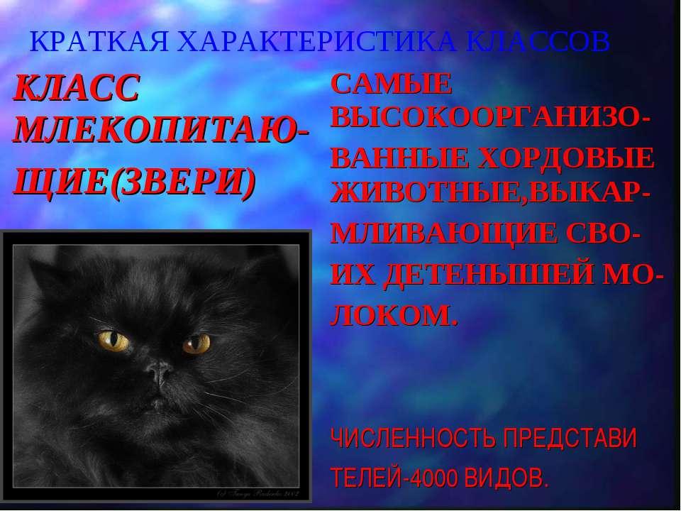 КРАТКАЯ ХАРАКТЕРИСТИКА КЛАССОВ КЛАСС МЛЕКОПИТАЮ- ЩИЕ(ЗВЕРИ) САМЫЕ ВЫСОКООРГАН...