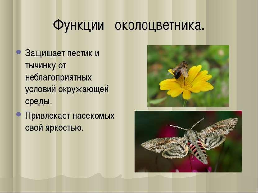 Функции околоцветника. Защищает пестик и тычинку от нeблагоприятныx условий о...