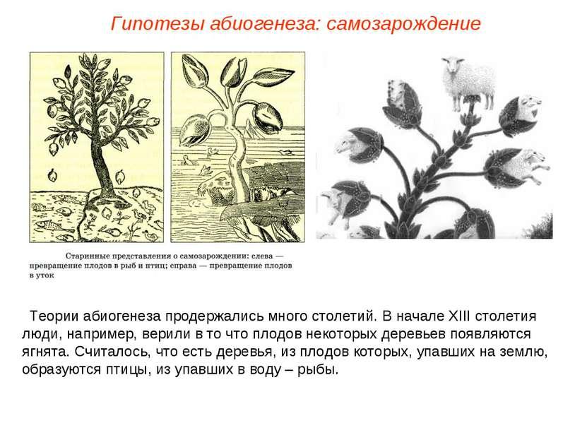Теории абиогенеза продержались много столетий. В начале ХIII столетия люди, н...