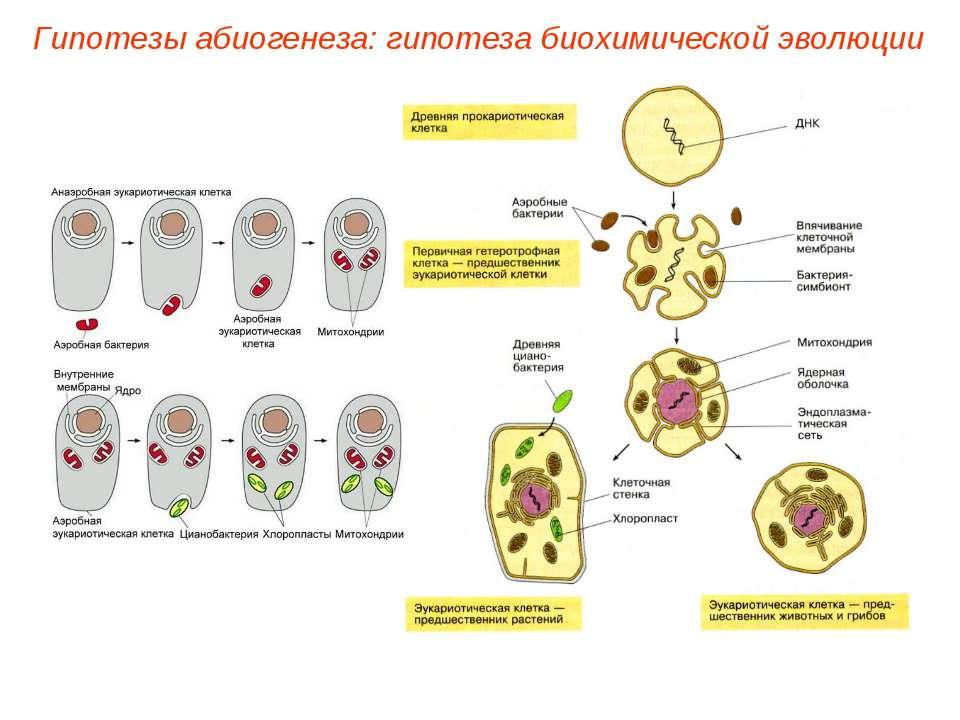 Гипотезы абиогенеза: гипотеза биохимической эволюции
