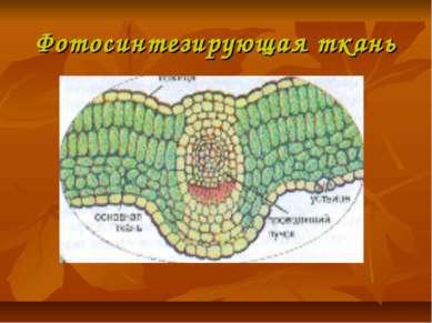 Фотосинтезирующая ткань