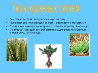 Все корни растения образуют корневую систему Различают два типа корневых сист...