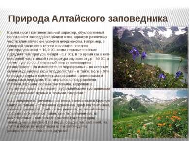 Природа Алтайского заповедника Климат носит континентальный характер, обуслов...