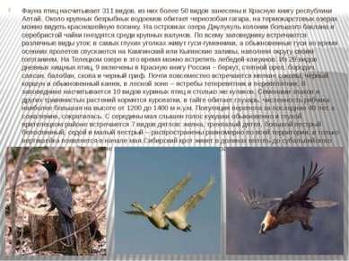 Фауна птиц насчитывает 311 видов, из них более 50 видов занесены в Красную кн...