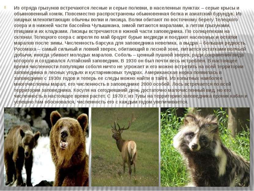 Из отряда грызунов встречаются лесные и серые полевки, в населенных пунктах –...